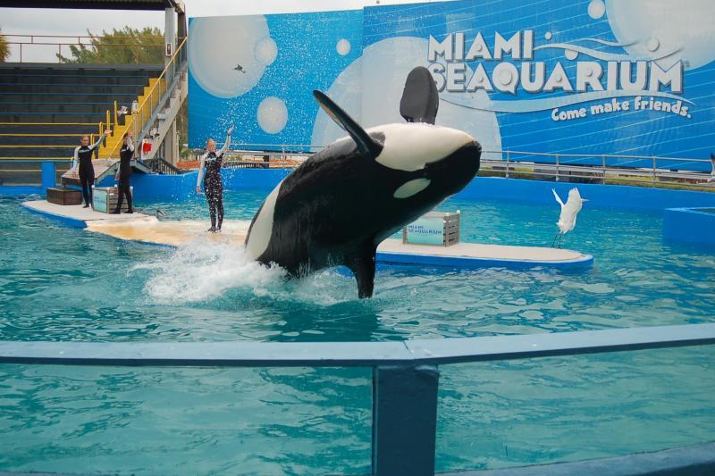 迈阿密出发景点门票1日游:MI-T-7181