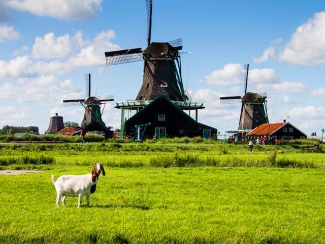 阿姆斯特丹出发1日游:AM1-6681